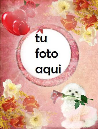 Marco Para Foto Cachorro Con Rosa Amor Marcos - Marco Para Foto Cachorro Con Rosa Amor Marcos
