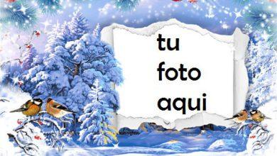 Photo of Marco Para Foto Copos De Nieve Del Árbol De Nueva York Invierno Marcos