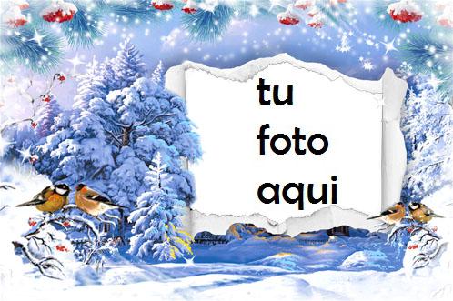 Marco Para Foto Copos De Nieve Del Árbol De Nueva York Invierno Marcos 1 - Marco Para Foto Copos De Nieve Del Árbol De Nueva York Invierno Marcos