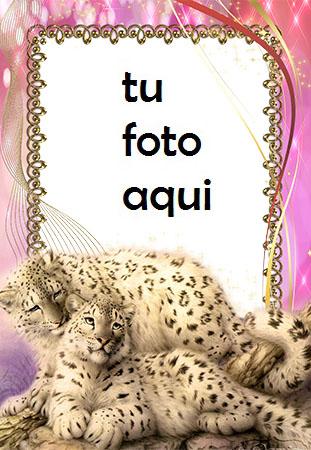 Marco Para Foto Cuadro Con Leopardos De Las Nieves Amor Marcos - Marco Para Foto Cuadro Con Leopardos De Las Nieves Amor Marcos