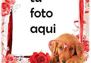 Photo of Marco Para Foto Di Amor Con Un Marco De Fotos Con Un Lindo Perro Amor Marcos