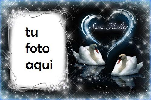 Marco Para Foto Fidelidad Cisne Amor Marcos - Marco Para Foto Fidelidad Cisne Amor Marcos