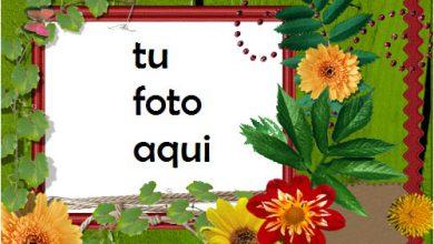 Marco Para Foto Flores Brillantes Primavera Marcos 390x220 - Marco Para Foto Flores Brillantes Primavera Marcos