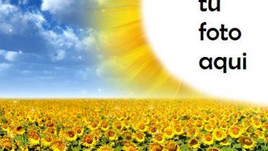 Marco Para Foto Flores De Sol Brillante Primavera Marcos 390x220 - Marco Para Foto Flores De Sol Brillante Primavera Marcos