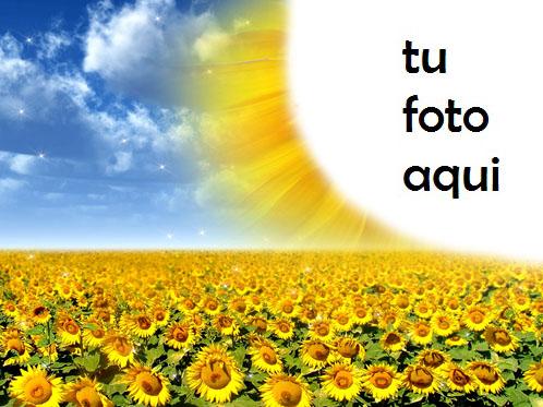 Marco Para Foto Flores De Sol Brillante Primavera Marcos - Marco Para Foto Flores De Sol Brillante Primavera Marcos