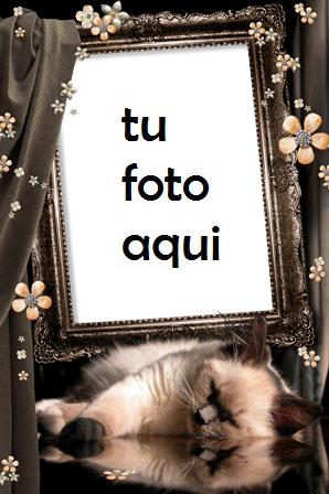 Marco Para Foto Gatito Dulce Amor Marcos - Marco Para Foto Gatito Dulce Amor Marcos