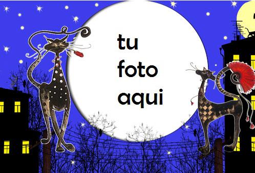Marco Para Foto Gatos En El Techo Variedad Marcos - Marco Para Foto Gatos En El Techo Variedad Marcos