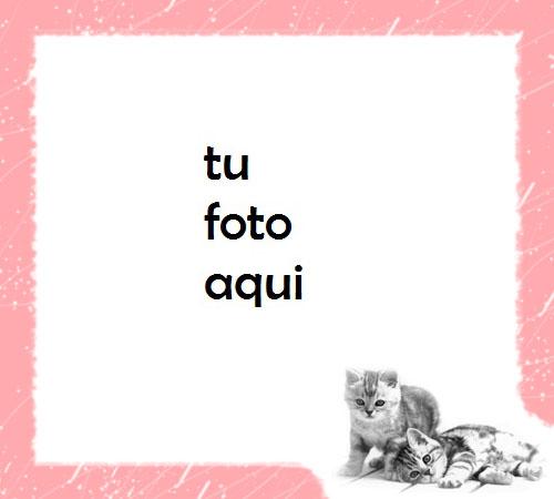 Marco Para Foto Gatos Rosados Amor Marcos - Marco Para Foto Gatos Rosados Amor Marcos