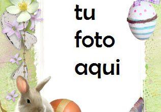 Marco Para Foto Lindo Conejito De Pascua Primavera Marcos 316x220 - Marco Para Foto Lindo Conejito De Pascua Primavera Marcos