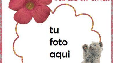 Marco Para Foto Mi Gatito Amor Marcos 390x220 - Marco Para Foto Mi Gatito Amor Marcos