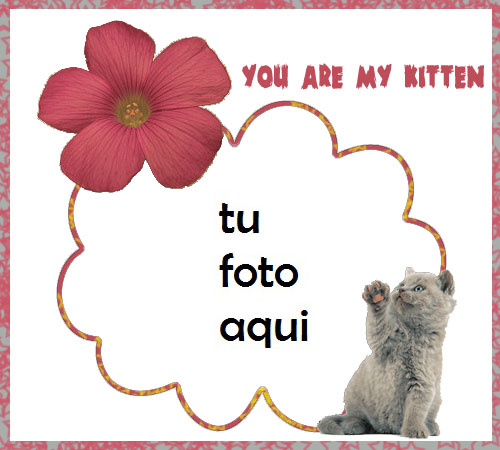 Marco Para Foto Mi Gatito Amor Marcos - Marco Para Foto Mi Gatito Amor Marcos
