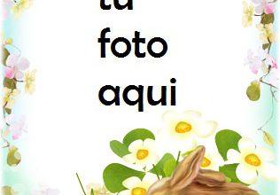 Marco Para Foto Pollo Y Conejo De Pascua Primavera Marcos 316x220 - Marco Para Foto Pollo Y Conejo De Pascua Primavera Marcos
