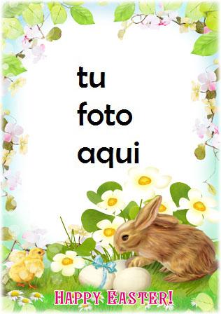 Marco Para Foto Pollo Y Conejo De Pascua Primavera Marcos - Marco Para Foto Pollo Y Conejo De Pascua Primavera Marcos