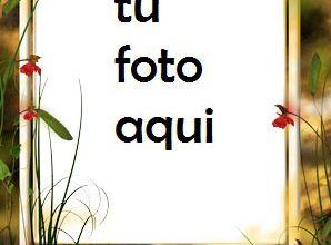 Marco Para Foto Rayo De Sol Amor Marcos 298x220 - Marco Para Foto Rayo De Sol Amor Marcos