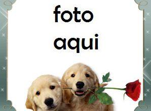 Marco Para Foto Regalo Romántico Amor Marcos 298x220 - Marco Para Foto Regalo Romántico Amor Marcos
