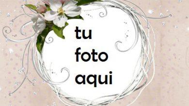 Photo of Marco Para Foto Resumen Rosa Amor Marcos