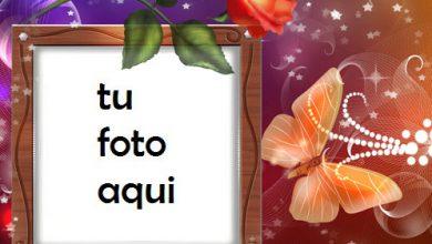 Marco Para Foto Rosa Y Mariposa Amor Marcos 390x220 - Marco Para Foto Rosa Y Mariposa Amor Marcos
