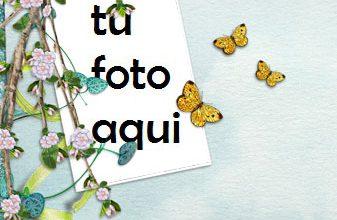 Marco Para Foto Sakura Y Mariposas Amor Marcos 337x220 - Marco Para Foto Sakura Y Mariposas Amor Marcos