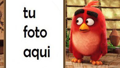 Photo of Marco Para Foto Película De Pájaros Enojados Niños Marcos