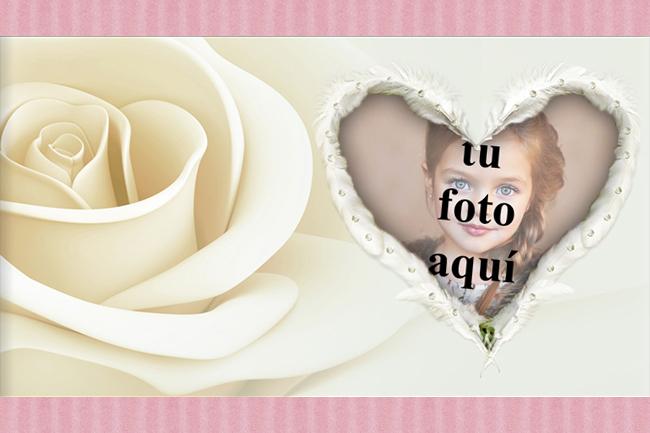 Foto Marcos el corazon de rosa blanca - Foto Marcos el corazon de rosa blanca