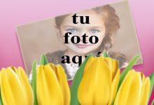 Rosa amarilla Foto Marcos 220x150 - Rosa amarilla Foto Marcos