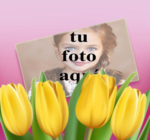 Rosa amarilla Foto Marcos - Rosa amarilla Foto Marcos