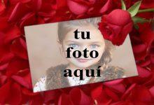 tu eres mi rosa roja Foto Marcos 220x150 - tu eres mi rosa roja Foto Marcos
