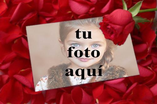 tu eres mi rosa roja Foto Marcos - tu eres mi rosa roja Foto Marcos