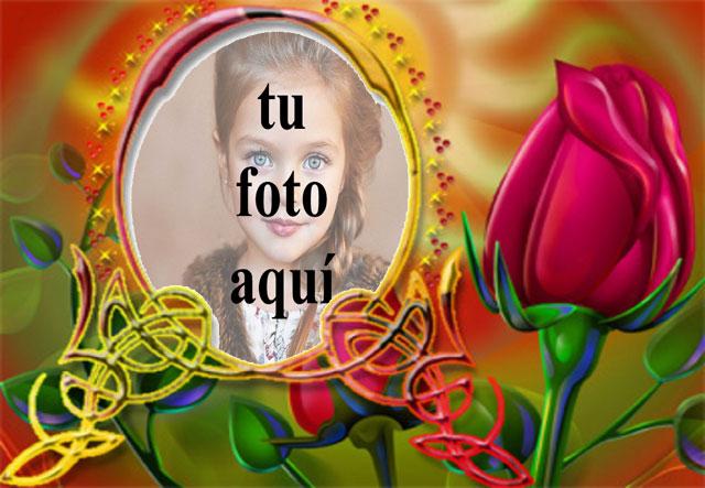 Marco Colorido Con Hermosa Rosa Roja Foto Marcos - Marco Colorido Con Hermosa Rosa Roja Foto Marcos