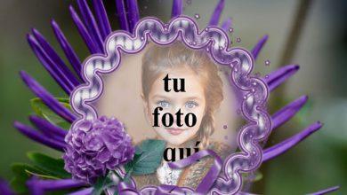 Marco De Rosas Violetas Con Flor Foto Marcos 390x220 - Marco De Rosas Violetas Con Flor Foto Marcos