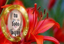 Marco Dorado Con Rosas Rojas Foto Marcos 220x150 - Marco Dorado Con Rosas Rojas Foto Marcos