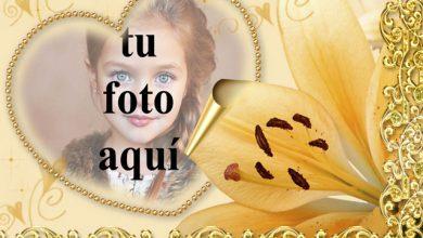 Marco de corazón decorado con bolas de oro foto marcos 390x220 - Marco de corazón decorado con bolas de oro foto marcos