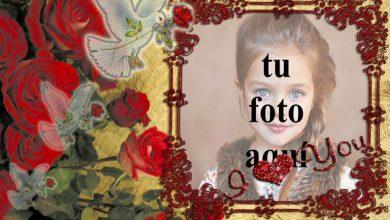 Photo of Pájaro de amor blanco con mi corazón foto marcos