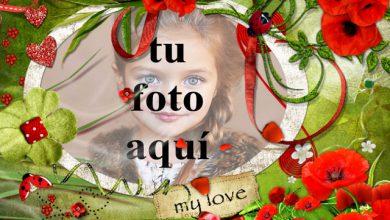 Parque tranquilo amor foto marcos 390x220 - Parque tranquilo amor foto marcos