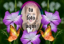 Un Marco De Hermosas Rosas Violetas Foto Marcos 220x150 - Un Marco De Hermosas Rosas Violetas Foto Marcos