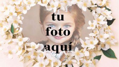 Photo of Un collar de flores blancas foto marcos