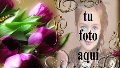 Photo of Un marco de rosas moradas foto marcos