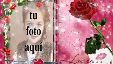 Una rosa roja amor foto marcos 390x220 - Una rosa roja amor foto marcos