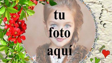 Photo of Te amo con marco de fotos de rosas rojas