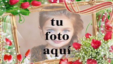 flores jardin marco de fotos decorado rosas rojas 390x220 - flores jardín marco de fotos decorado rosas rojas