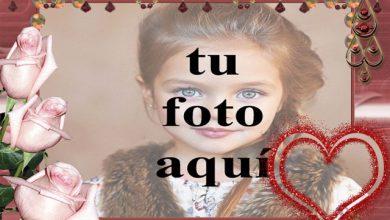 rosas rosadas con marco de fotos de corazón rojo 390x220 - rosas rosadas con marco de fotos de corazón rojo