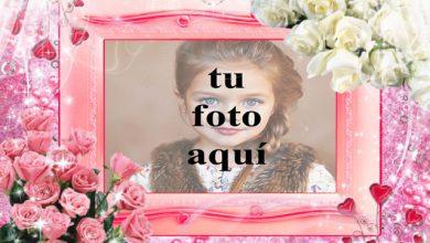 Photo of Marco de fotos de rosas rosadas y rosas blancas con fondo muy romántico