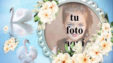Photo of marco de fotos romántico cisne con rosas blancas