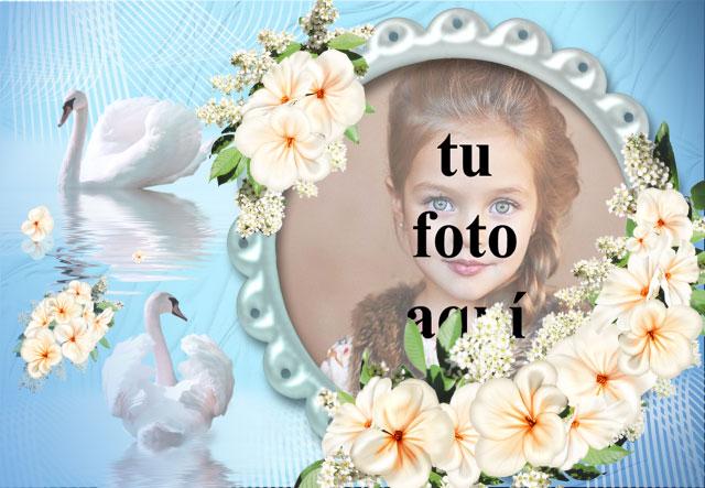 marco de fotos romantico cisne con rosas blancas - marco de fotos romántico cisne con rosas blancas