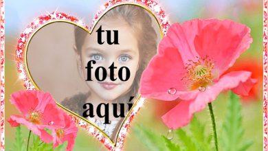 el marco de fotos romantico del jardin de flores rosa 390x220 - el marco de fotos romántico del jardín de flores rosa