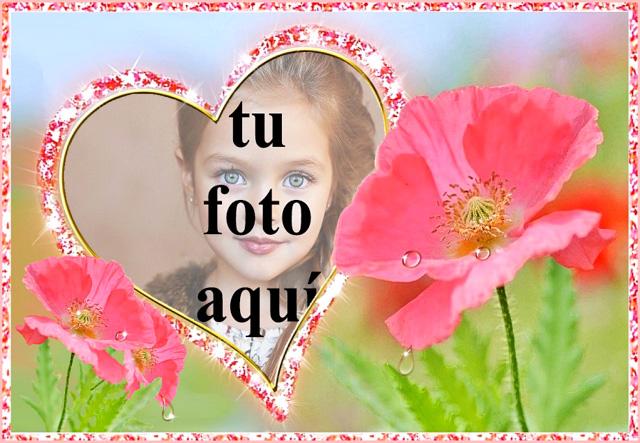 el marco de fotos romantico del jardin de flores rosa - el marco de fotos romántico del jardín de flores rosa