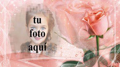 marco romantico rosa con marco de fotos rosa amor rosa 390x220 - marco romántico rosa con marco de fotos rosa amor rosa