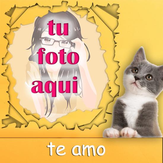 Gato Travieso Mascotas Foto Marcos - Gato Travieso Mascotas Foto Marcos