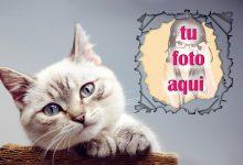 La Mirada Mascotas Foto Marcos 220x150 - La Mirada Mascotas Foto Marcos