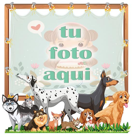 Perros lindos mascotas marcos de fotos - Perros lindos mascotas marcos de fotos